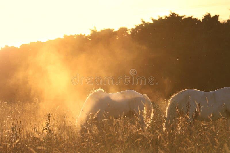 Cavalos na luz surreal imagem de stock