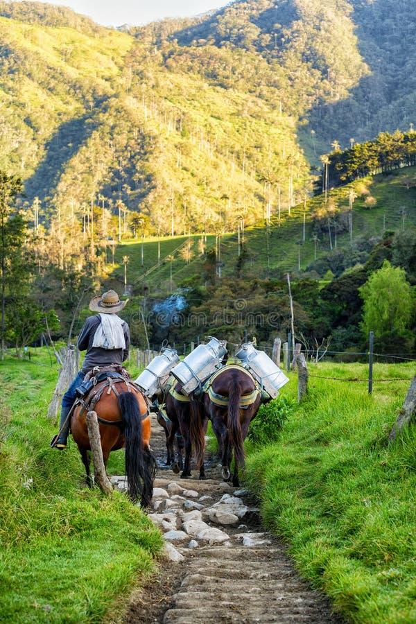 Cavalos na manhã foto de stock royalty free