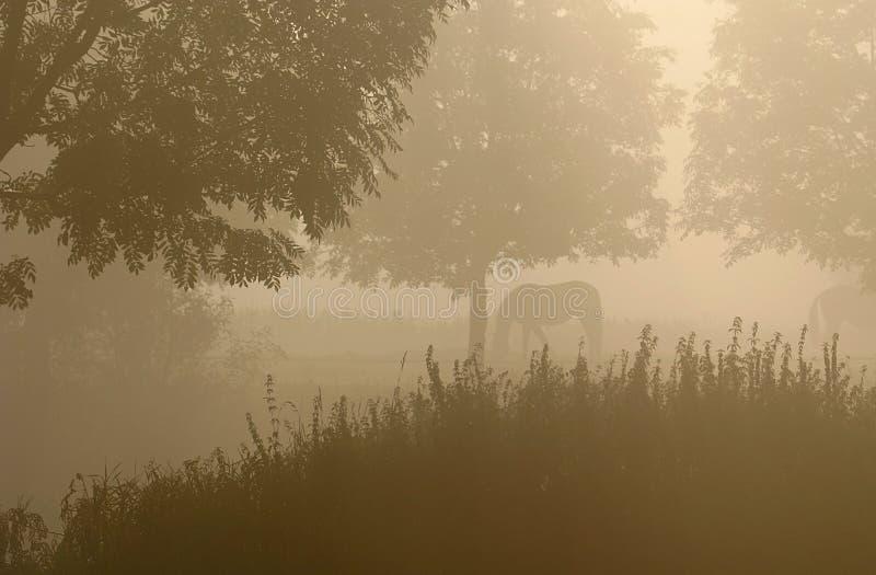 Download Cavalos na névoa imagem de stock. Imagem de bonito, dianteiro - 1246763