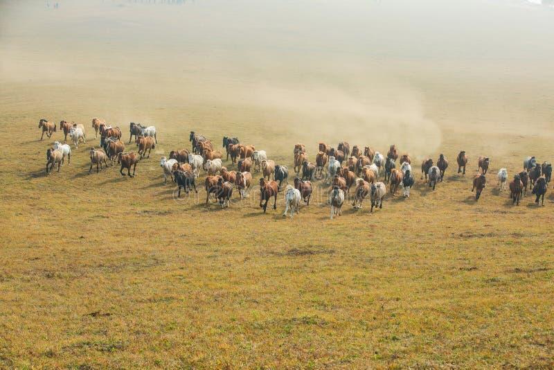 Cavalos na pradaria de Inner Mongolia, China foto de stock royalty free