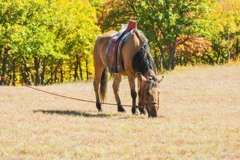 Cavalos na pradaria de Inner Mongolia, China imagem de stock