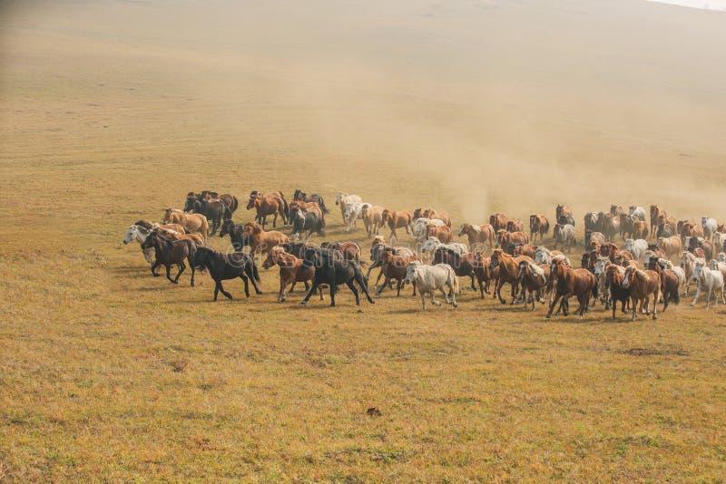 Cavalos na pradaria de Inner Mongolia, China fotografia de stock