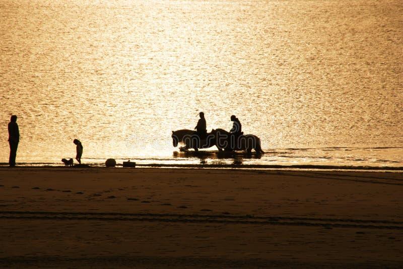 Cavalos na praia fotografia de stock royalty free