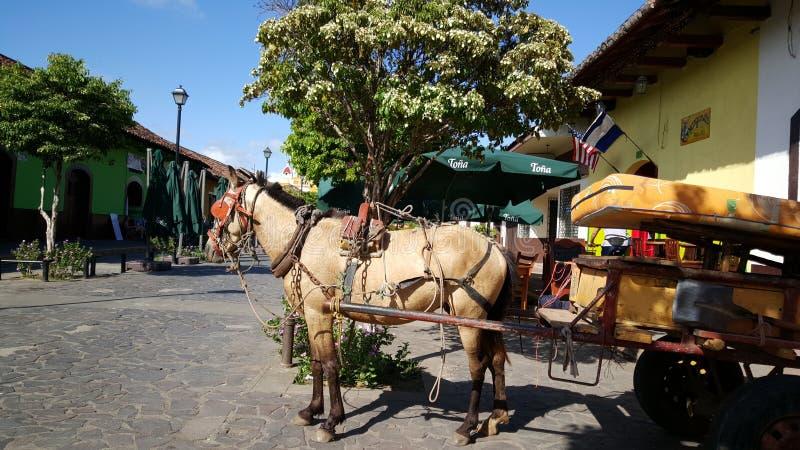 Cavalos na rua imagem de stock