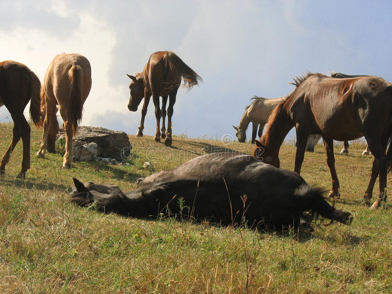 Cavalos nas montanhas fotografia de stock royalty free