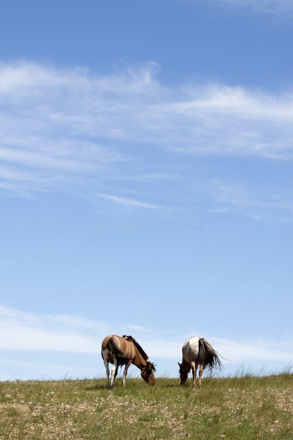 Cavalos nas pradarias fotografia de stock