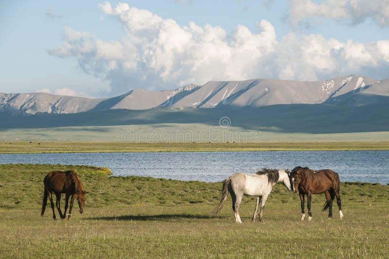 Cavalos no fundo das montanhas e do lago Songköl foto de stock royalty free