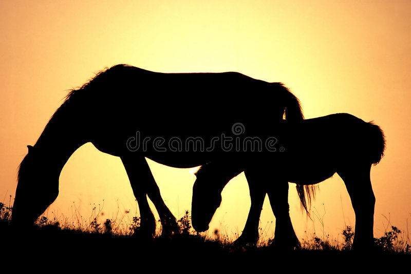 Cavalos no por do sol imagem de stock royalty free