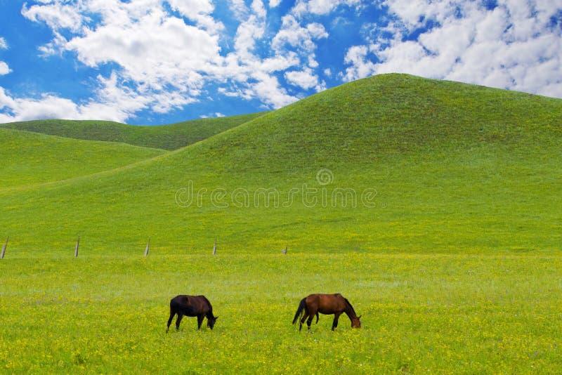 Cavalos no prado verde imagens de stock royalty free