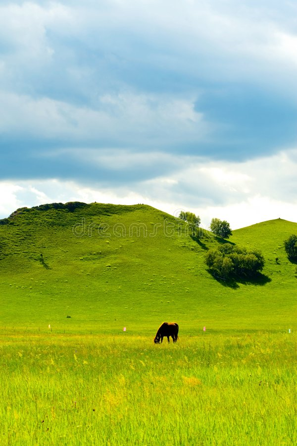 Cavalos no prado verde fotos de stock royalty free