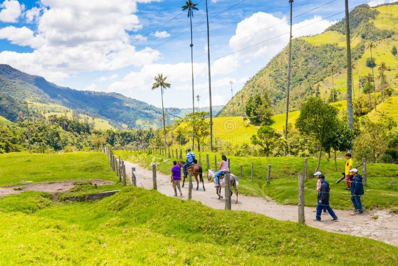 Cavalos no vale Salento Colômbia de Cocora foto de stock royalty free
