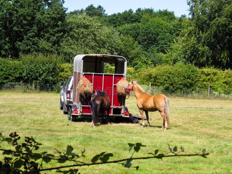 Cavalos pelo reboque imagem de stock