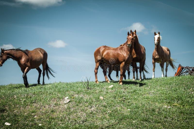 Cavalos que estão contra um céu azul fotos de stock