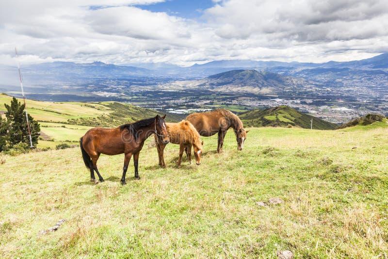 Cavalos que pastam nas alturas das montanhas imagens de stock