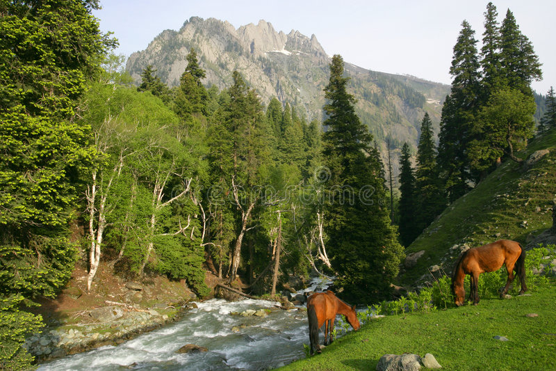 Cavalos que pastam nas montanhas fotos de stock royalty free