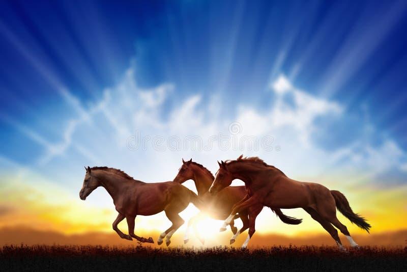 Cavalos running