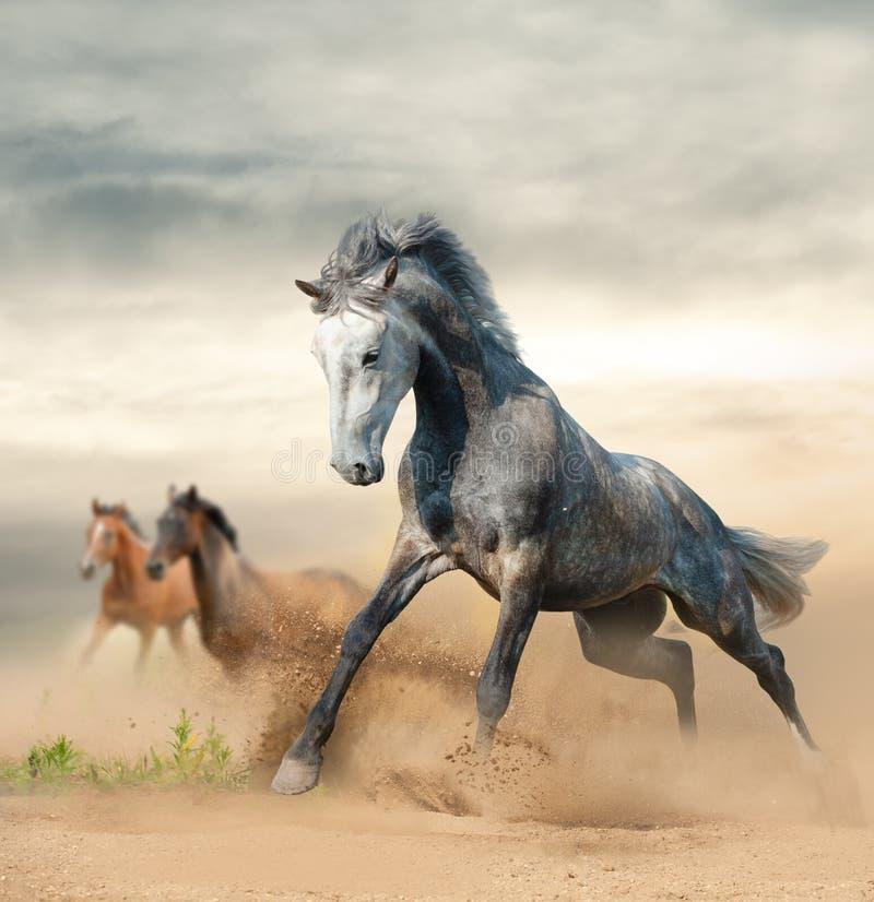 Cavalos selvagens bonitos na liberdade fotografia de stock