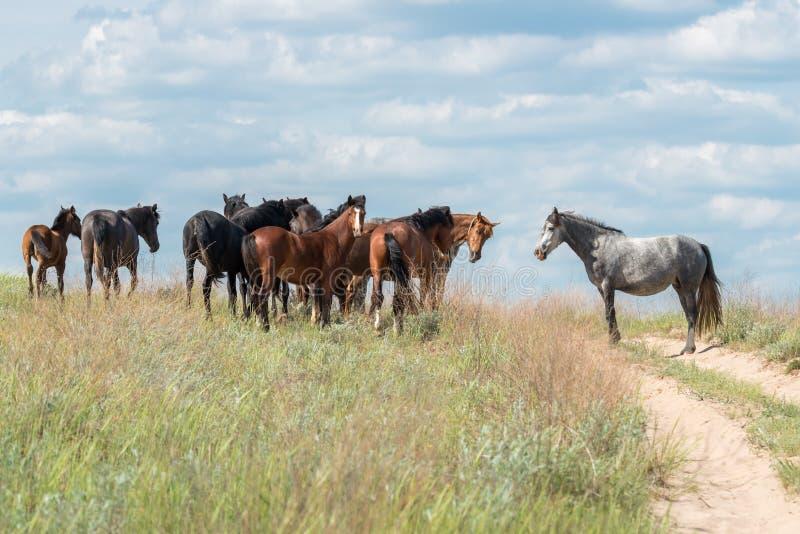 Cavalos Cavalos selvagens contra o céu azul fotos de stock