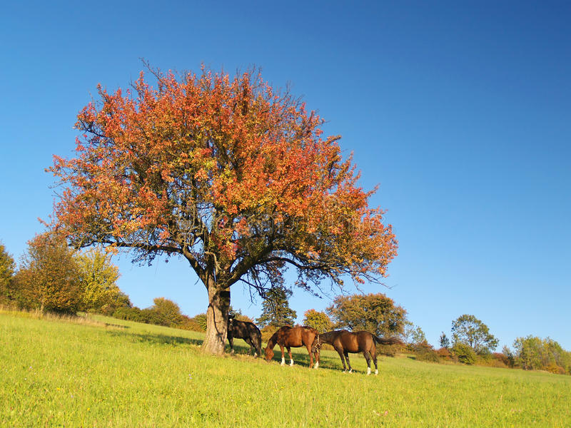 Cavalos sob a árvore na noite atrasada fotos de stock royalty free