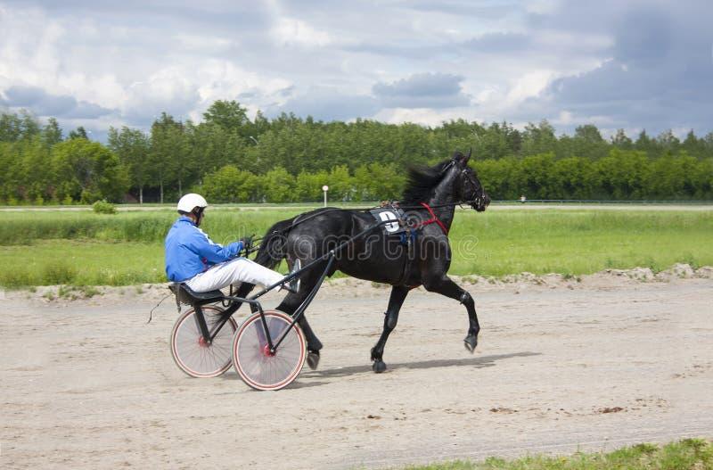 Cavalos trotando na pista fotos de stock royalty free