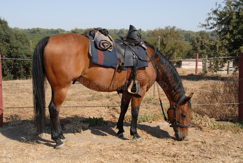 Cavalry horse royalty free stock photography