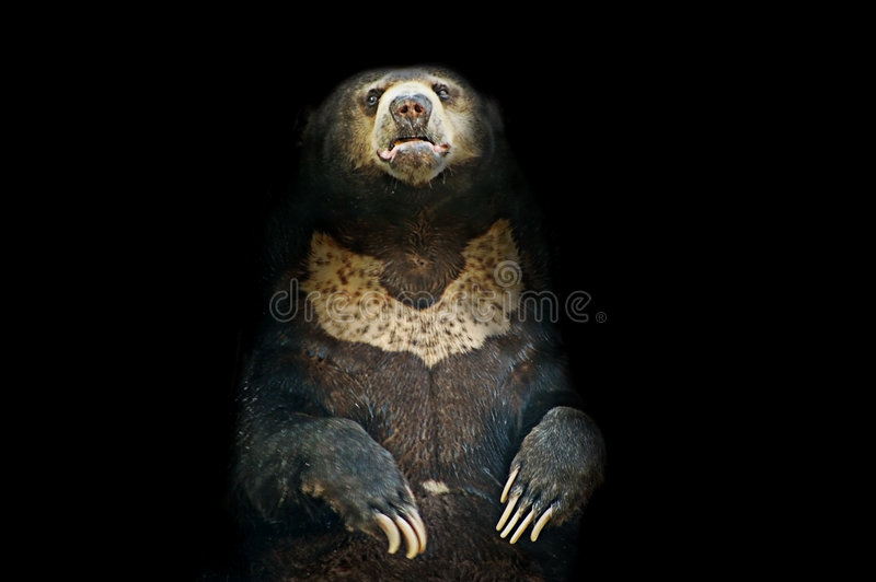 Cave bear stock images