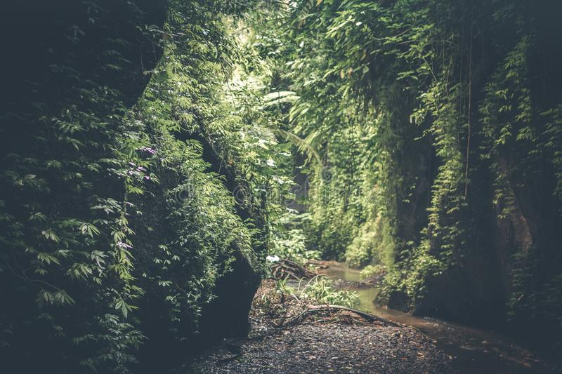 Cave Filed With Green Plants stock photography