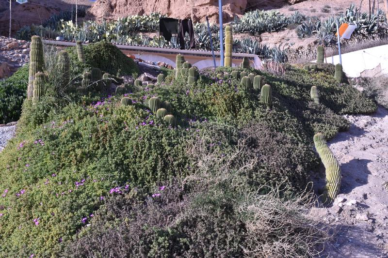Cave house in the Gorafe desert with area planted with cactus. Garden area with typical plants of deserts in a village stock photos