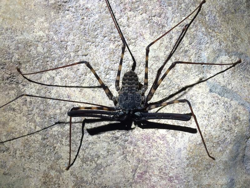 Cave spider royalty free stock images