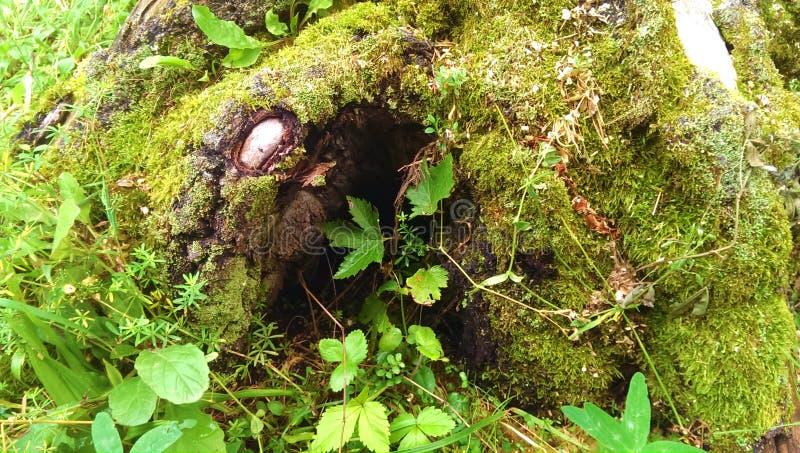 Caverna da floresta fotos de stock royalty free