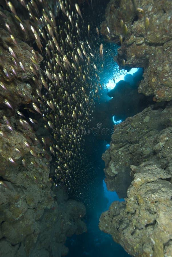 Caverna de Glassfish imagens de stock royalty free