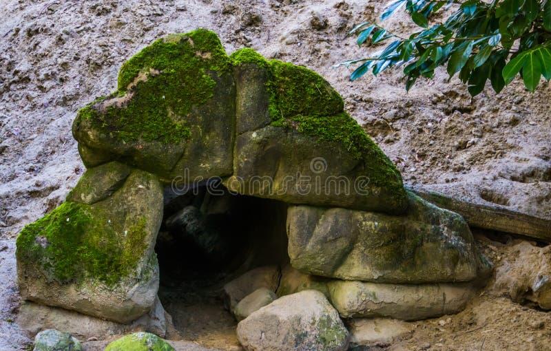 Caverne animale sous des certains pierres et sable, petit tunnel dans un mur, roches couvertes dans la mousse images libres de droits