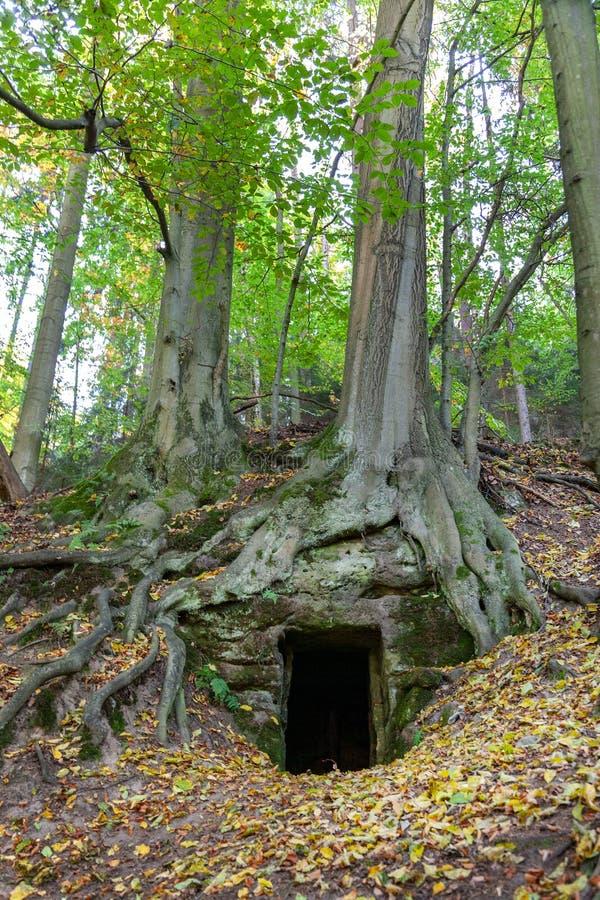Caverne dans la forêt, vallée de Kokorin, Bohême centrale, repub tchèque photos libres de droits