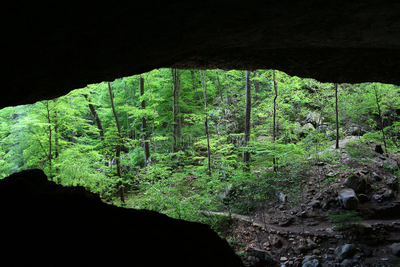 Caverne de forêt photographie stock libre de droits