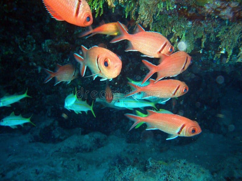 Caverne de poissons image libre de droits