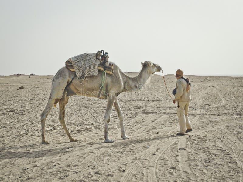 Cavi beduini sopra il cammello nel deserto del Sahara fotografia stock