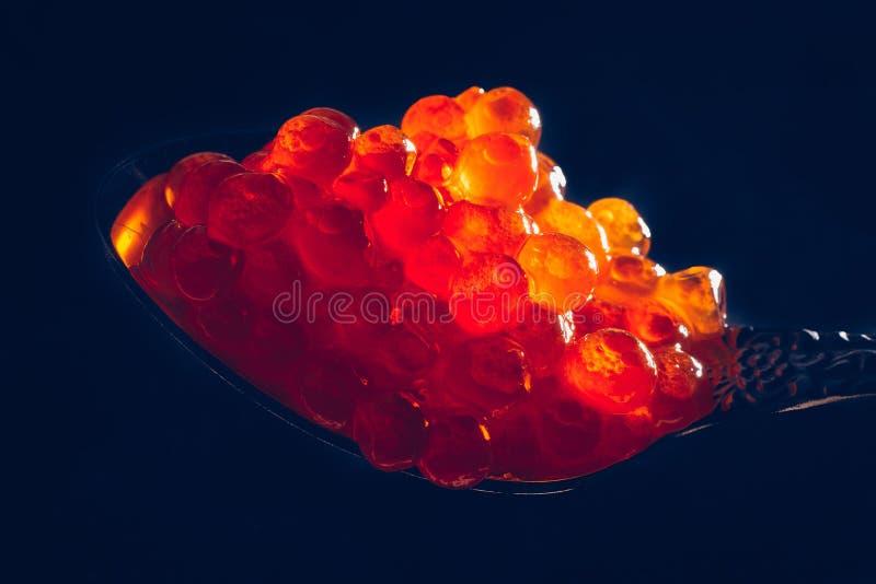 Caviar rojo en cuchara en el fondo negro, foto macra imagen de archivo libre de regalías