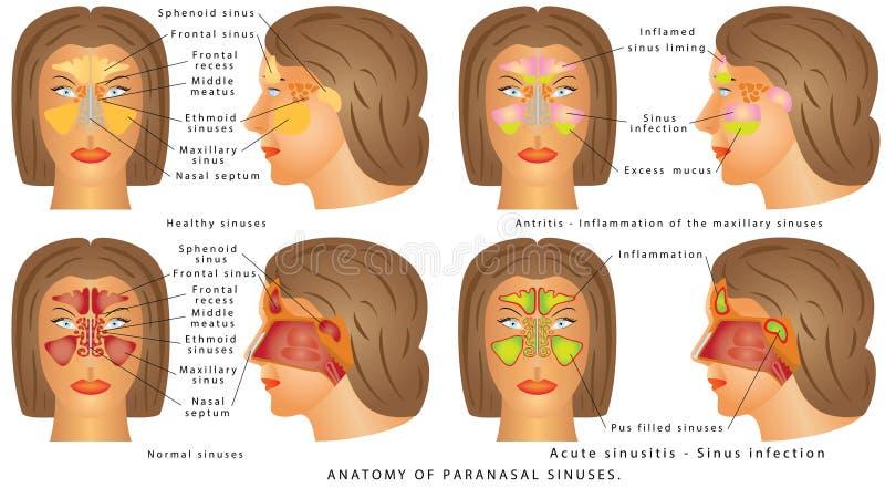 Cavidade nasal ilustração stock