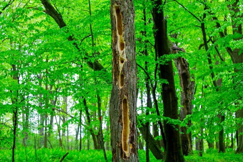 Cavidades de la pulsación de corriente en el bosque foto de archivo libre de regalías