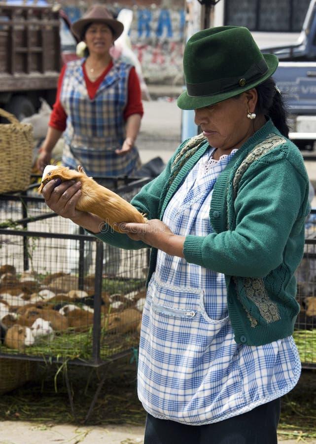 Cavie - mercato dell'alimento - l'Ecuador fotografie stock