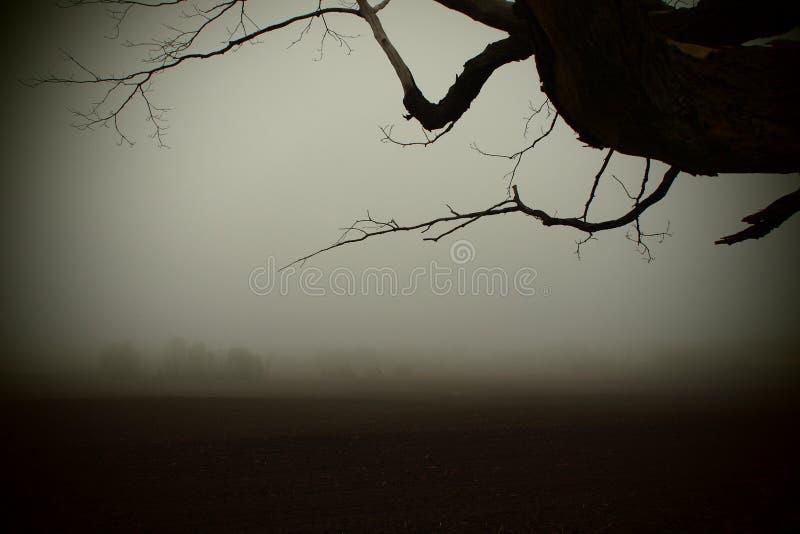 Cavità sonnolenta fotografie stock