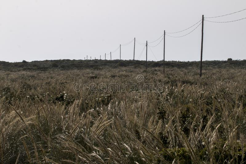 Cavo di elettricità su un campo fotografie stock