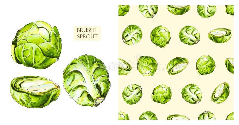 Cavoletti di Bruxelles isolati su fondo bianco illustrazione vettoriale