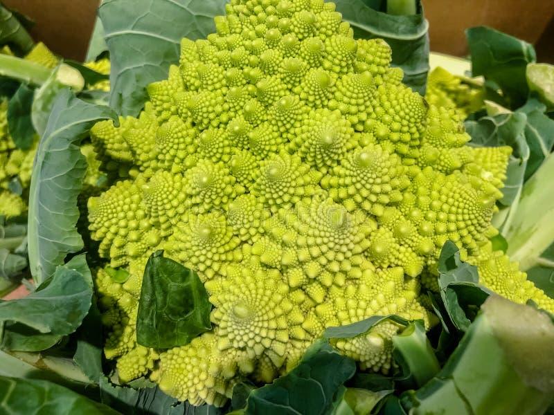 Cavolfiore di verde di Romanesco - di Broccoflower Buon effetto a spirale di Fibonacci Fuoco selettivo immagine stock libera da diritti