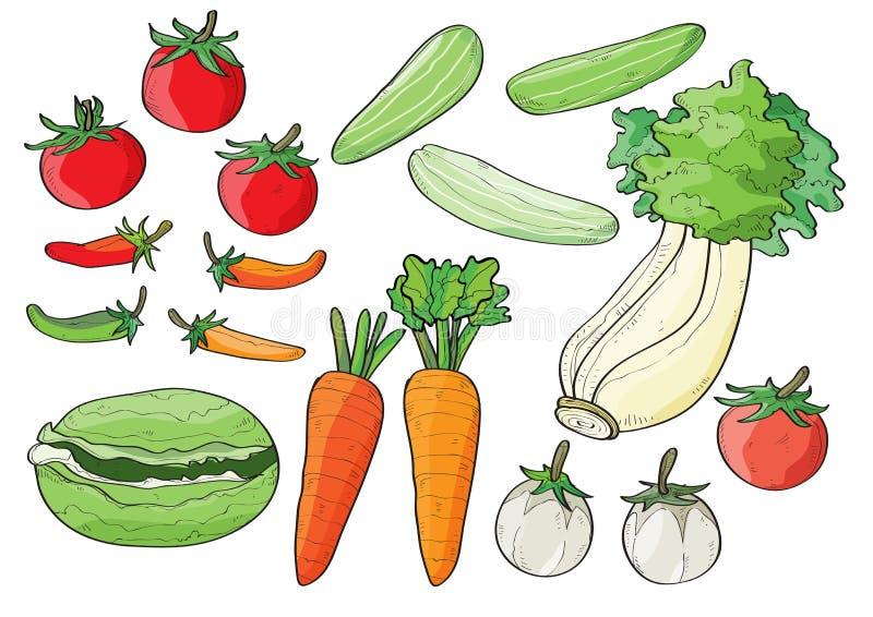 Cavolo di verdure della lattuga del cetriolo dei peperoncini rossi del pomodoro della carota fotografia stock libera da diritti