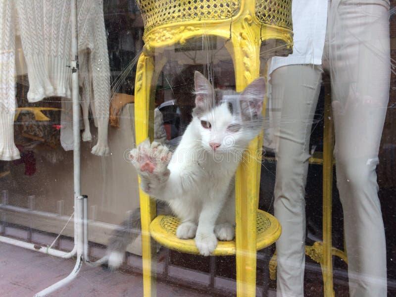 Cay за окном 1 магазина стоковые изображения