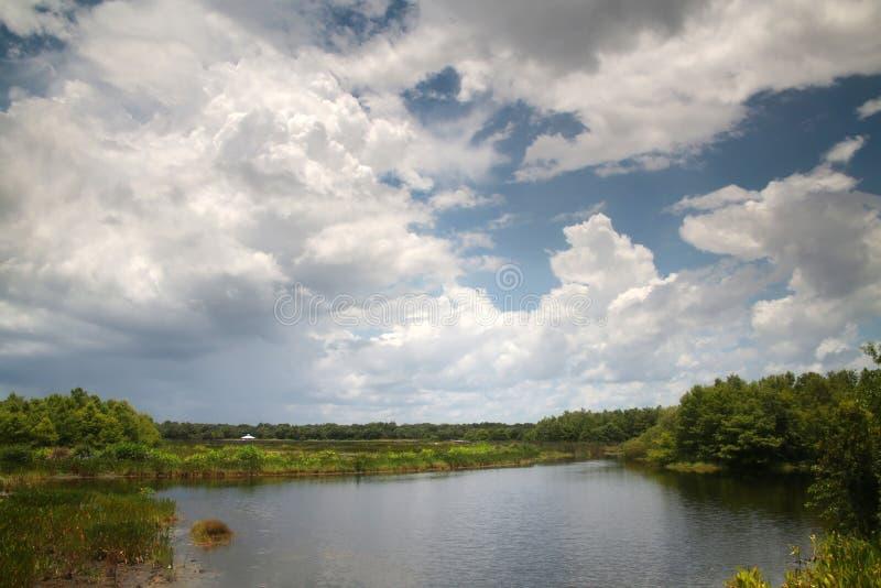 Cay Wetlands verde immagine stock libera da diritti