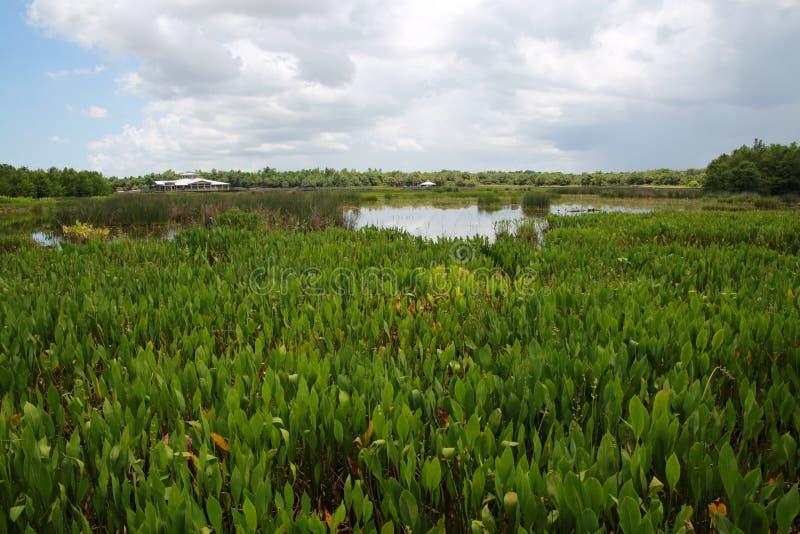 Cay Wetlands verde fotografia stock
