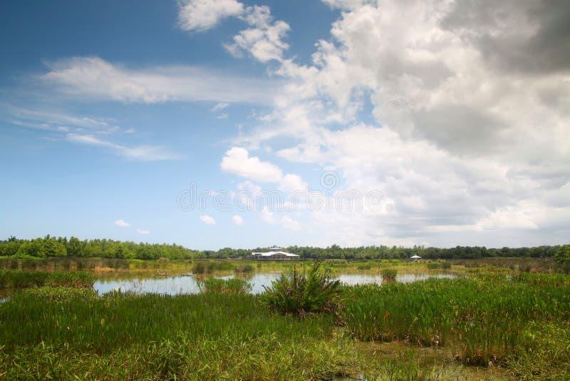 Cay Wetlands verde fotografia stock libera da diritti