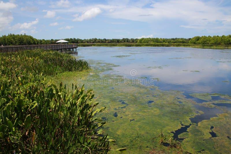 Cay Wetlands verde fotografie stock